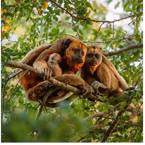 uipa-doacoes-animais-sp-macacos